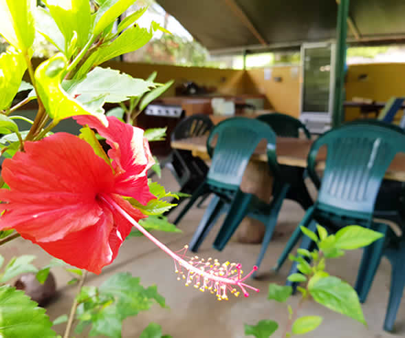 Daintree Camping Facilities