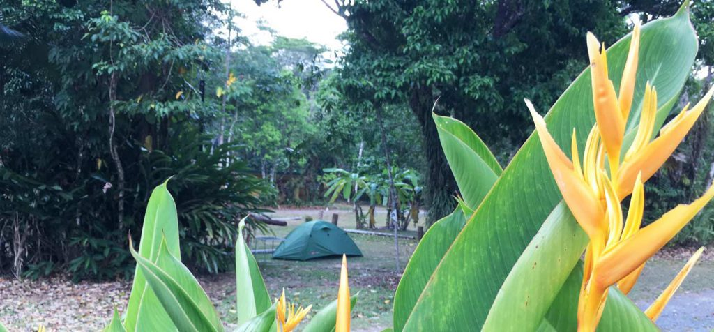 Camping-In-Daintree