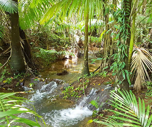 Daintree Campground Activities