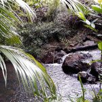 Shady-Swimming-Hole-in-Rain-Forest-Stream