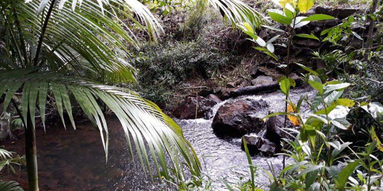 Shady-Swimming-Hole-in-Rain-Forest-Stream