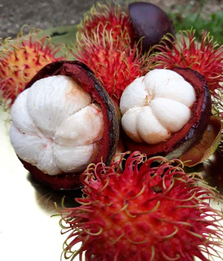 Tropical-Fruit-WetSeason