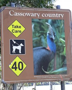 Cassowaries near the ferry to Daintree Rainforest
