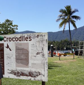 Crocodiles in the Daintree River near the Ferry