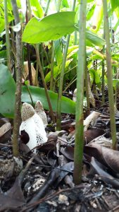 Wet Daintree rainrest- mushrooms sprouting everywhere